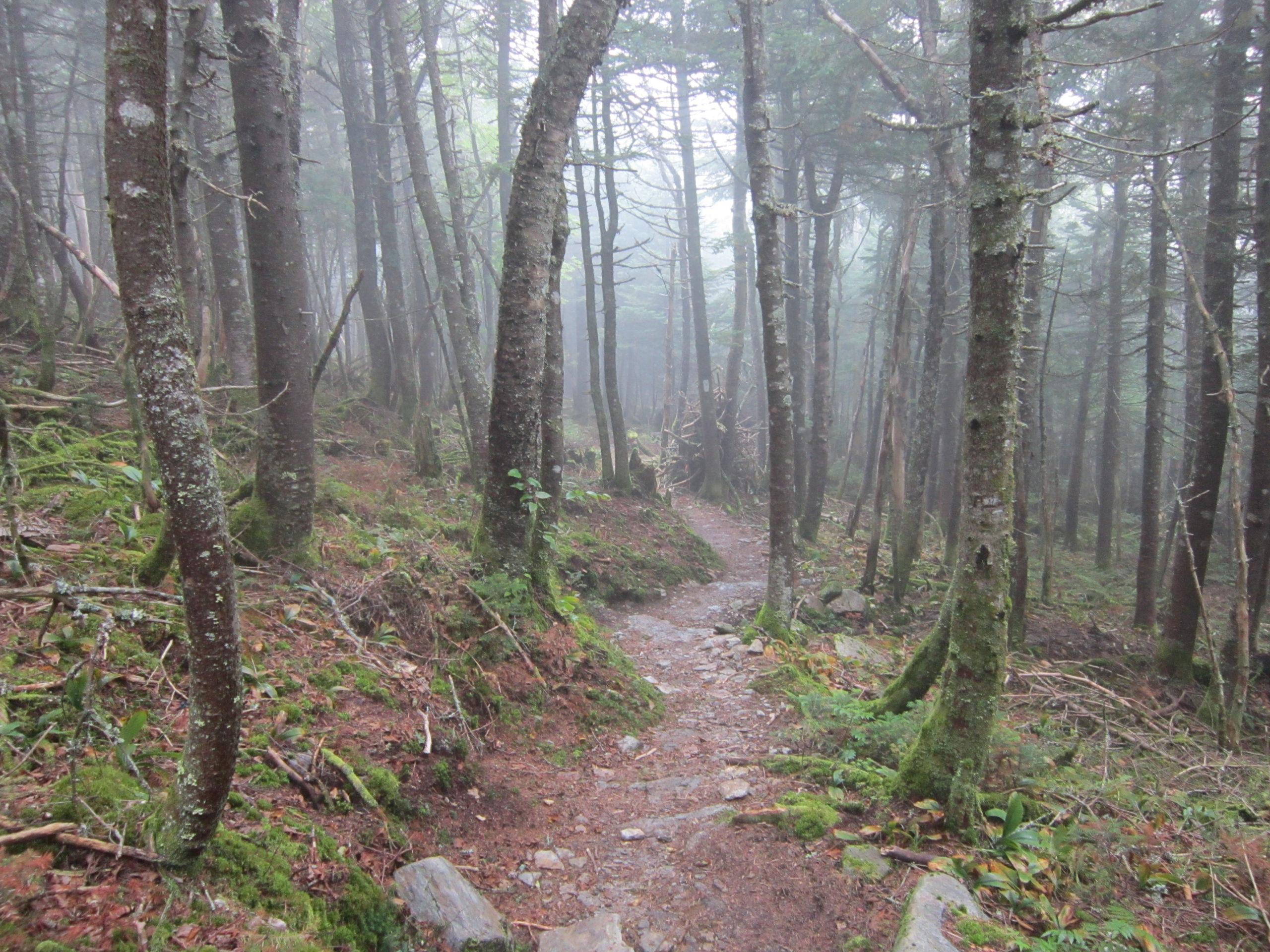 Foggy Forest Trail